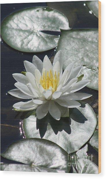 Water Lily II Wood Print