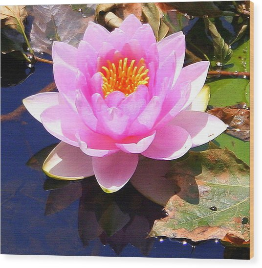 Water Lily In Pink Wood Print