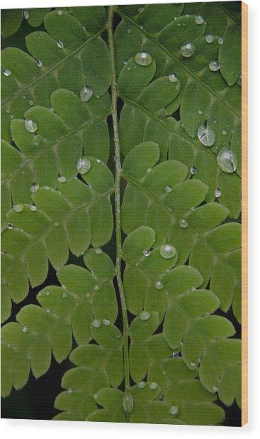 Water On Fern  Wood Print