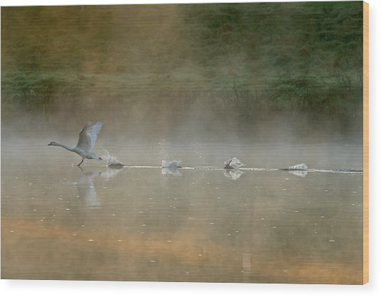 Water Runner Wood Print