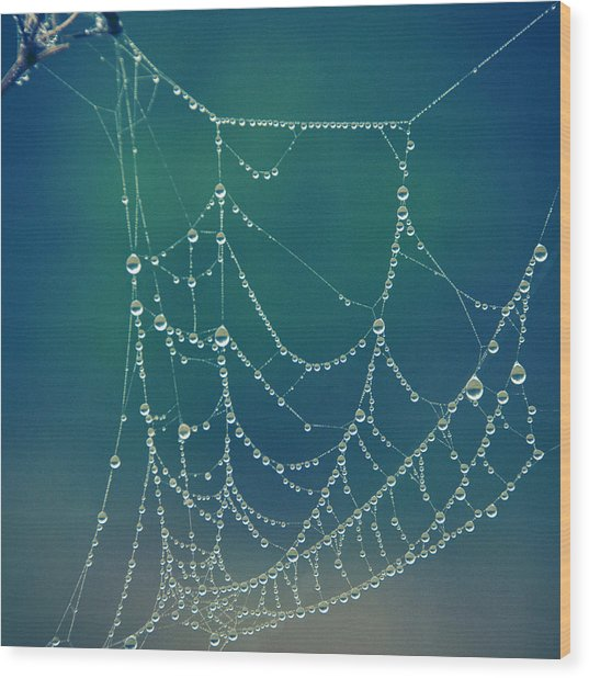Water Web Wood Print