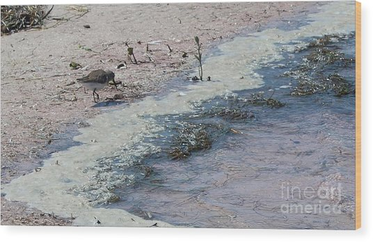Watercolor Sandpipers Wood Print