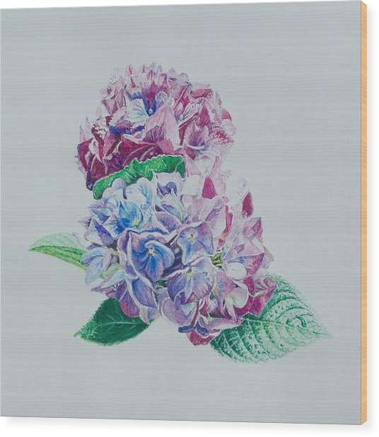 Watercolored Hydrangea Wood Print