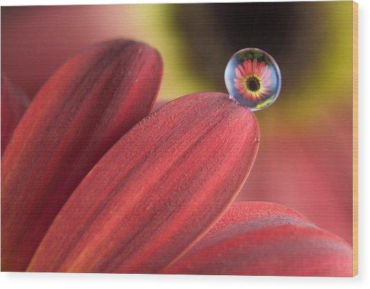 Waterdrop On Flower Petal Wood Print