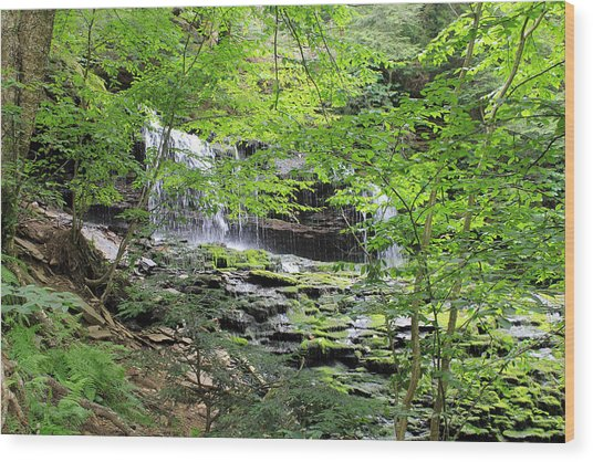 Waterfall Ricketts Glen State Park Pa Wood Print