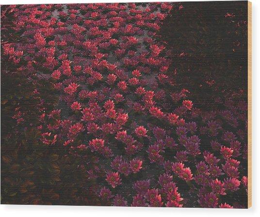 Waterlilies 2 Wood Print