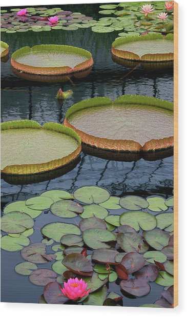 Waterlilies And Platters 2 Wood Print