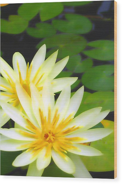 Waterlilies In Pond Wood Print