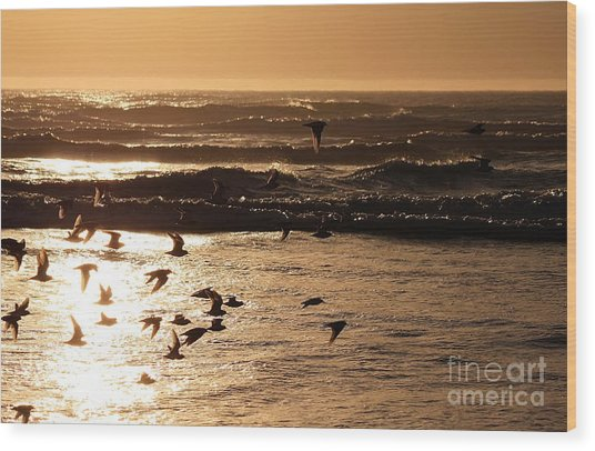 Waves And Wings Wood Print
