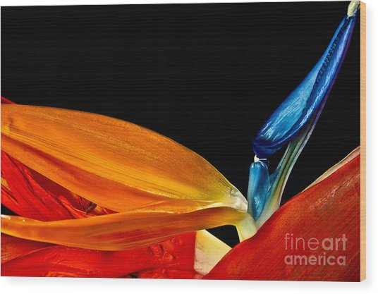 Waves Of Color 2009 Wood Print