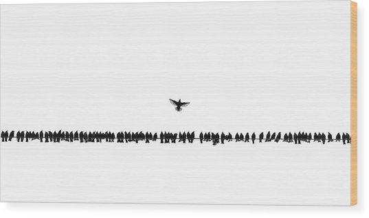 We Warn You Icarus, Not Too Close To The Sun Wood Print