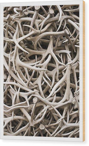 Weathered Elk Antlers Wood Print