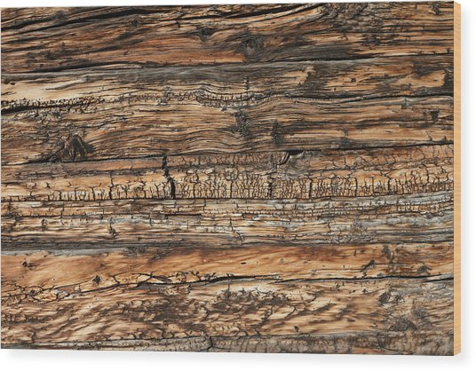 Weathered Wood 5 Wood Print by Charles Lupica