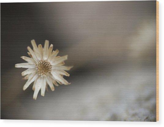 Weed Wood Print