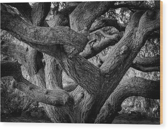 Weeping Hemlock Wood Print
