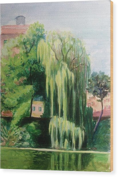 Weeping Willow At North Pond Wood Print