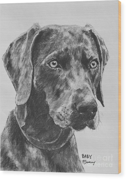 Weimaraner Drawn In Charcoal Wood Print