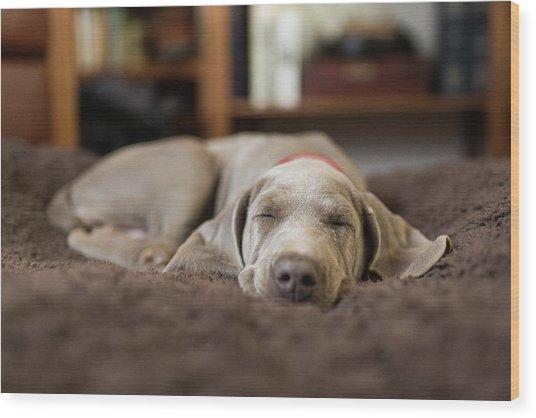 Weimaraner Puppy Sleeping Indoors Wood Print