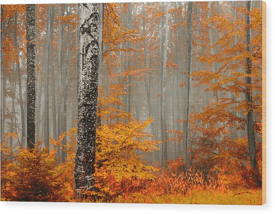 Welcome To Orange Forest Wood Print