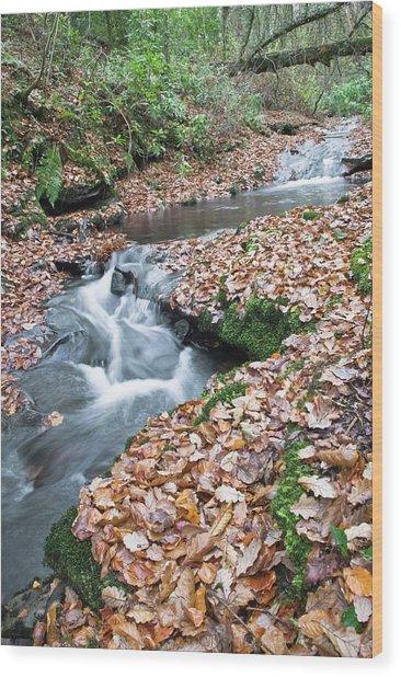 Welsh Woodland Stream. Wood Print