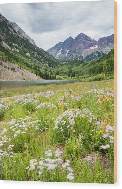 West Elk Wildflowers Wood Print