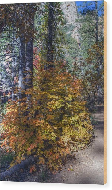 West Fork Fall Color Wood Print