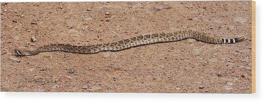 Western Diamondback Rattle Snake Wood Print