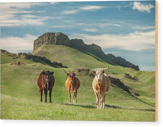 Western Longhorns Wood Print