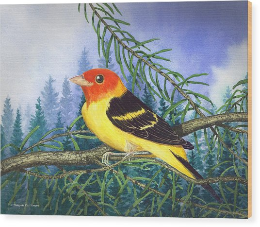 Western Tanager In Yosemite Wood Print