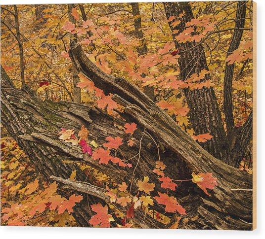 Westfork Foilage Wood Print