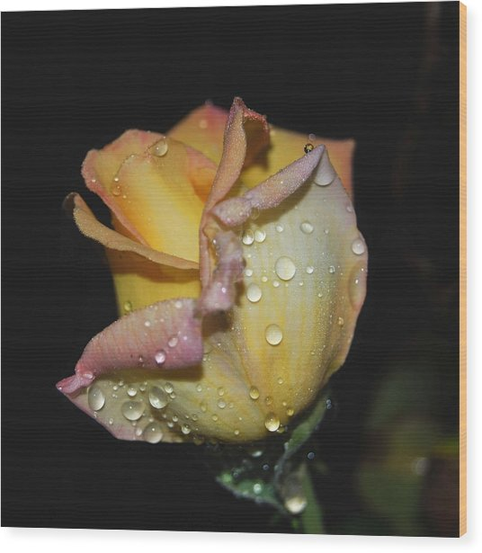 Wood Print featuring the photograph Wet And Wonderful by Judy Hall-Folde