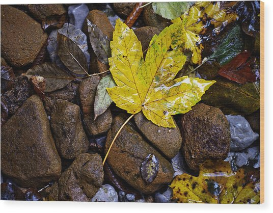Wet Autumn Leaf On Stones Wood Print