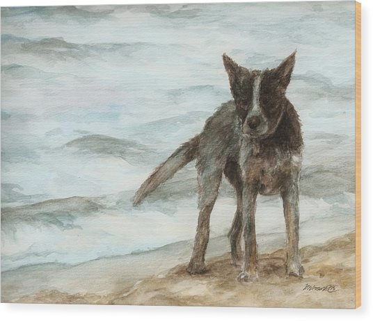 Wet Dog - Cattle Dog Wood Print