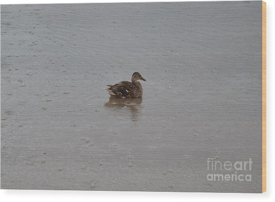 Wet Duck Wood Print