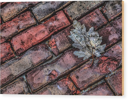 Wet Leaf Road Wood Print