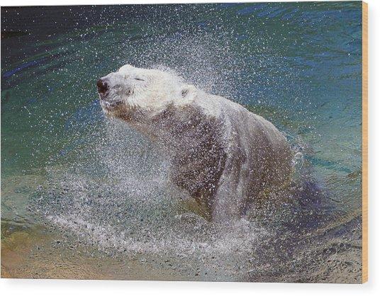 Wet Polar Bear Wood Print