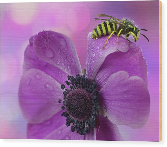 Wet Wasp Wood Print by Mikroman6