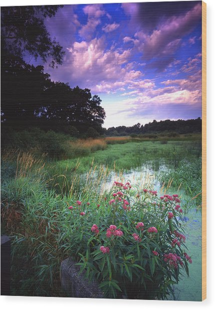 Wetland Wonder Wood Print