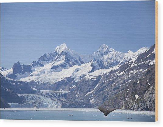 whale in Glacier Bay Park Alaska Wood Print by Nick Jene