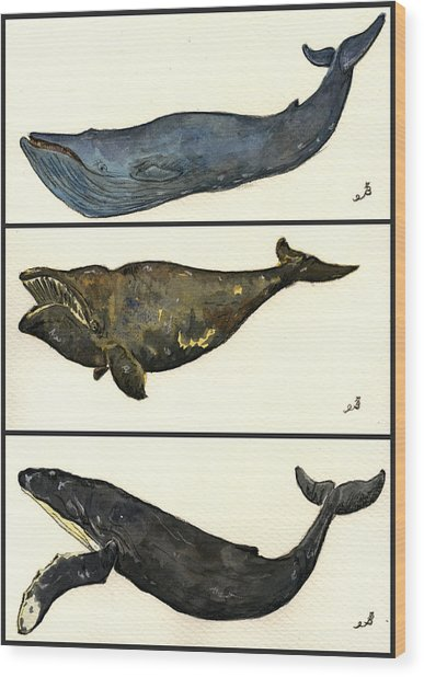 Whales Compilation 1 Wood Print by Juan  Bosco
