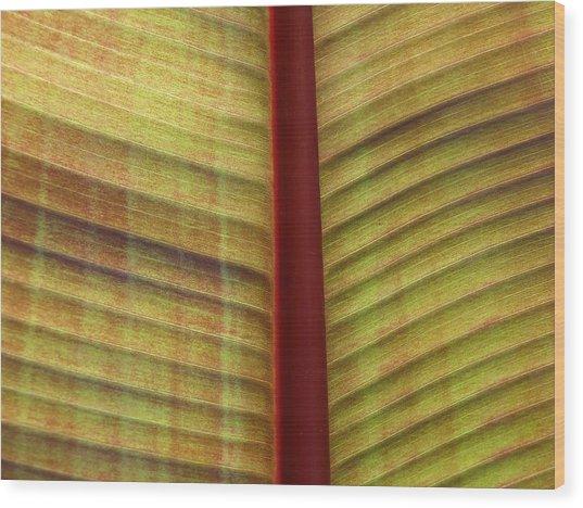 What Am I ? Wood Print by Jonathan Kratz