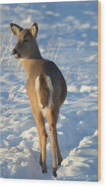 What Do You Think This Deer Is Saying? Wood Print