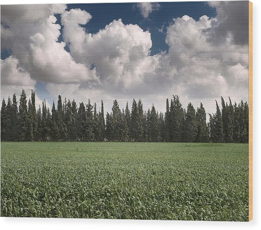 Wheat Field And Clouds Wood Print