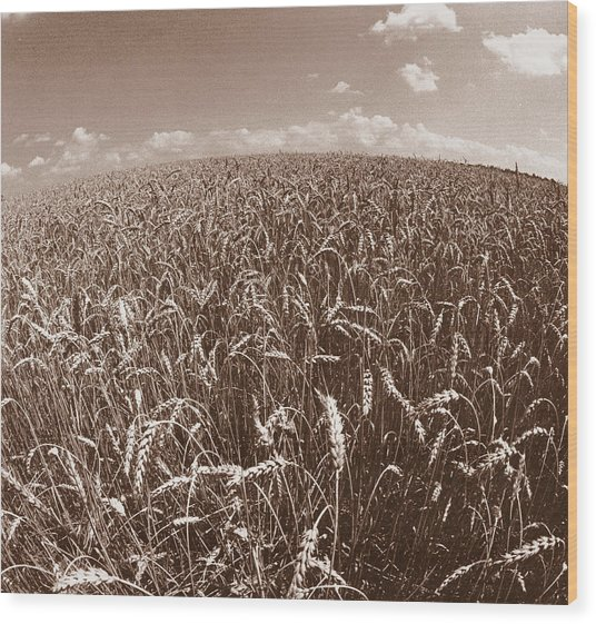 Wheat Fields Forever Wood Print