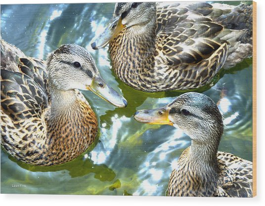 When Duck Bills Meet Wood Print