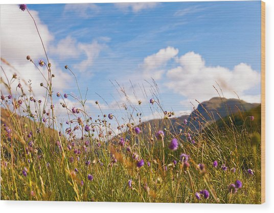 When The Sun Is Shining Everything Around Smiling Towards. Scotland Wood Print