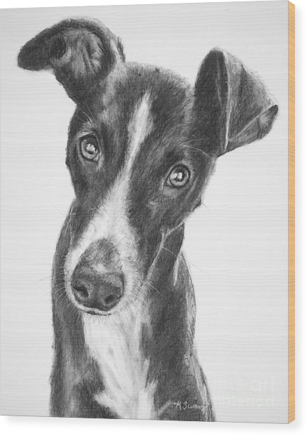 Whippet Black And White Wood Print