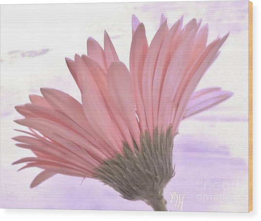 Whispy Daisy Wood Print by Marsha Heiken
