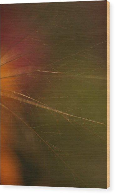 Whispy Wood Print