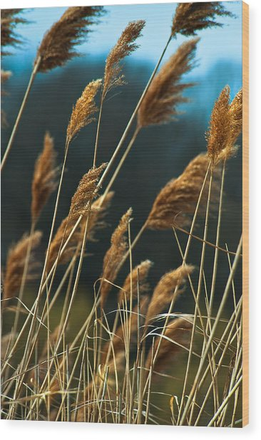 Whistling Wind Wood Print by Mike Feraco